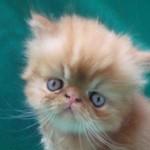 Os gatinhos usam a cauda para se equilibrar. (Foto: divulgação)