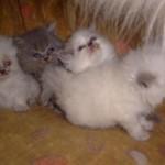 Ao afiarem as garras, os gatos deixam um sinal porque têm glândulas nas patas, que segregam uma substância, servindo como aviso para os outros gatos que lá estiverem. (Foto: divulgação)