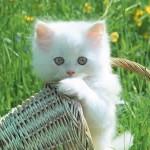 Os gatos veem bem no escuro porque os seus olhos refletem a luz, funcionando como pequenos faróis!  (Foto: divulgação)