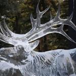 Alce esculpido no gelo em tamanho real. (Foto: divulgação)