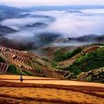Plantações na China (Foto: divulgação)