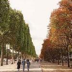 Passeio na margem esquerda do rio Sena, Paris (Foto: divulgação)
