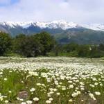 Primavera em Bariloche (Foto: divulgação)