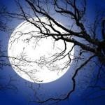 Lua cheia filtrada pelos galhos secos da árvore já sem vida (Foto: divulgação)