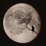 As noites de lua cheia inspiram os apaixonados (Foto: divulgação)