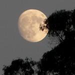 Nas noites de lua cheia a terra fica mais bonita (Foto: divulgação)