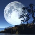 Lua imponente e gloriosa refletea sombra da arvore sinuosa (Foto: divulgação)