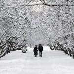 Parque amanhece coberto pela neve (Foto: divulgação)
