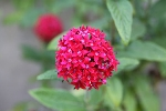 Plantas que dão flores o ano todo