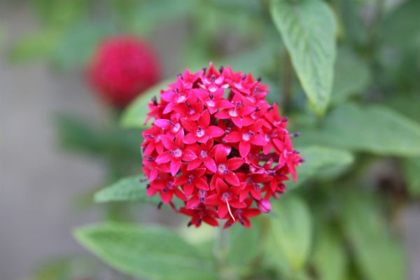 Plantas que d?o flores o ano todo - MundodasTribos ? Todas ...