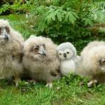Filhotes de coruja com um bichinho de pelúcia (Foto: divulgação)