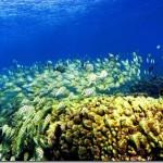 Coral Reef característica da ilha dos EUA, no Havaí (Foto: divulgação)