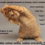 Gato crocante (Foto: divulgação)