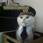 Capitão gato (Foto: divulgação)