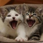 Gatinhos felizes (Foto: divulgação)