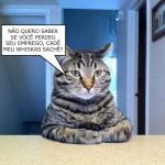 Gato com fome (Foto: divulgação)