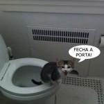 Gato usando o banheiro (Foto: divulgação)