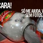 Gato dentro do vidro (Foto: divulgação)