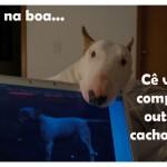 Cachorro ciumento (Foto: divulgação)