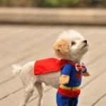 Cahorro Super-Herói (Foto: divulgação)