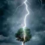 Raio caindo na árvore (Foto: divulgação)