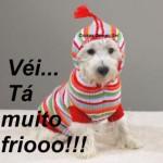 Cachorro com frio (Foto: divulgação)