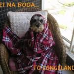 Cachorro congelando (Foto: divulgação)