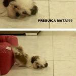 Cachorro preguiçoso (Foto: divulgação)