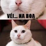 Gatinho gordo (Foto: divulgação)