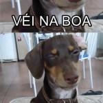 Cachorro curioso (Foto: divulgação)