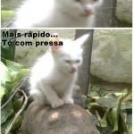 Gatinho apressado (Foto: divulgação)