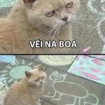Sacaneando o gato (Foto: divulgação)