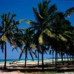 Porto de Galinhas - Praia repleta de coqueiros (Foto: divulgação)
