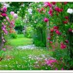 Jardim com predomínio de rosas (Foto: divulgação)