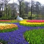 Jardim repleto de flores com cores fortes e vibrantes (Foto: divulgação)
