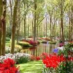 O jardim  necessita de bastante luminosidade para florir (Foto: divulgação)