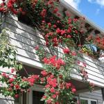 Qualquer lugar é possível abrigar um lindo jardim florido (Foto: divulgação)