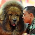É um cão rústico e resistente. (Foto:Divulgação)