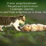 O amor e a amizade (Foto: divulgação)