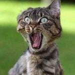 Gato assustado (Foto: divulgação)