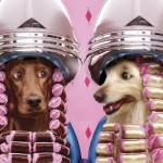 Cachorras no cabeleireiro (Foto: divulgação)