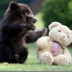 Ursinho brincalhão (Foto: divulgação)
