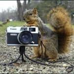 Esquilo fotógrafo (Foto: divulgação)