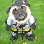 Cachorro fantasiado de Batman (Foto: divulgação)
