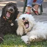 Cães engraçados (Foto: divulgação)
