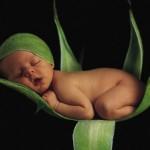 Bebê dormindo em cima de uma flor (Foto: divulgação)