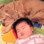 Bebê dormindo com cachorro (Foto: divulgação)