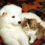 A amizade entre os animais é muito linda (Foto: divulgação)