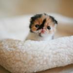 Filhote de gato sozinho (Foto: divulgação)