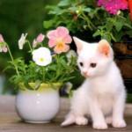 Calma gatinho, isso não é brinquedo (Foto: divulgação)